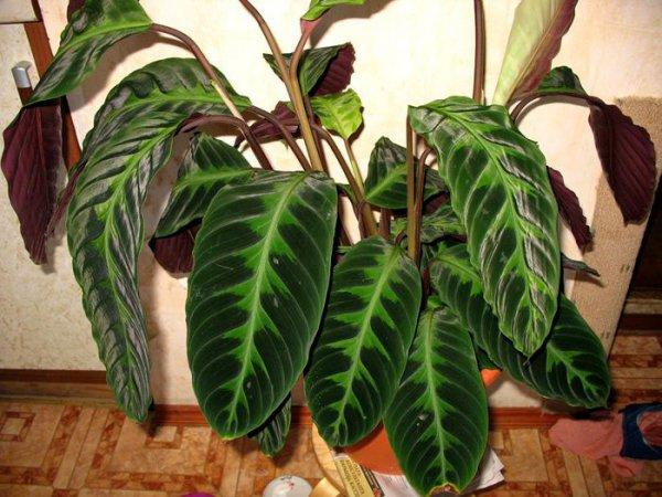 Разновидности домашних растений уход