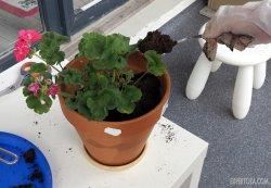 Посадка комнатных растений, перевалка, фото, состав почвы, выбор емкости