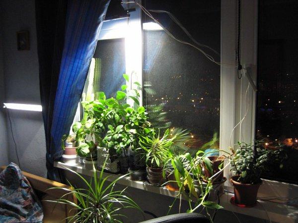 фитолампа для комнатных растений своими руками
