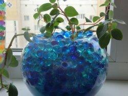 Растения для выращивания в гидрогеле 4